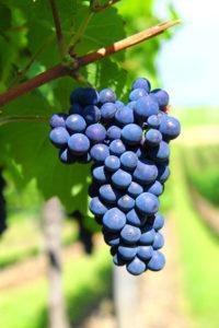 wijn-en-co-wijnproeverij-haaksbergen